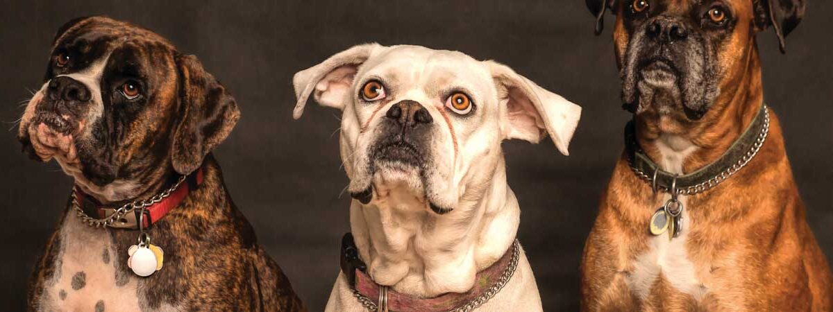 A complete wiki for all Dog breeds